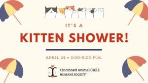 Cincinnati Animal Care Kitten Adoption in the Beer Garden